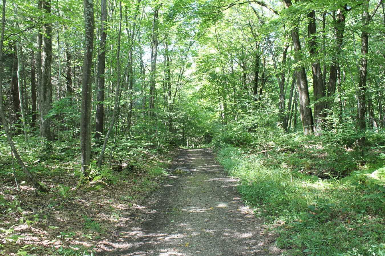 Photo of trail at Alford Springs