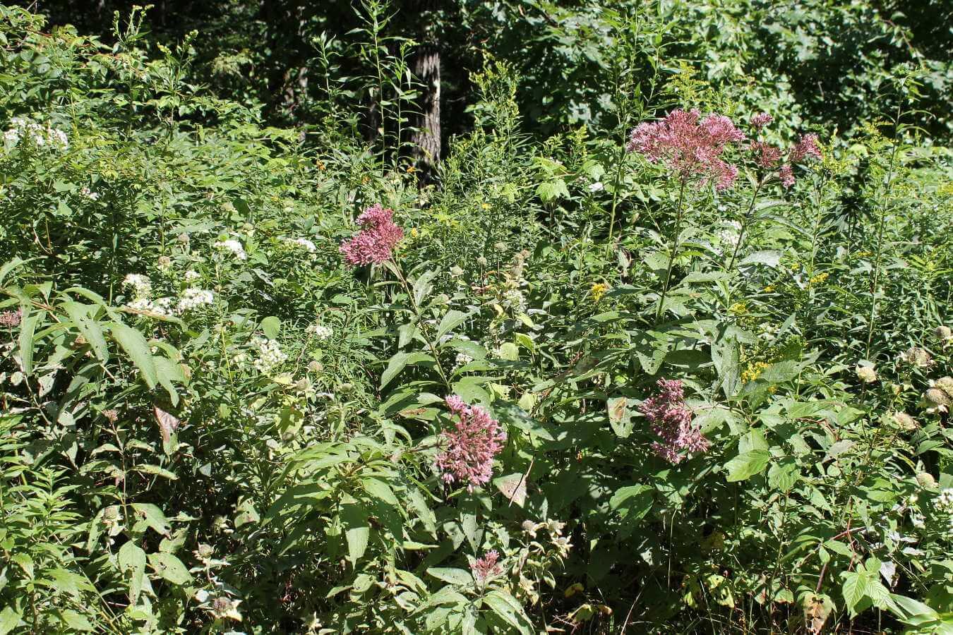 Photo of bushes at Alford Springs