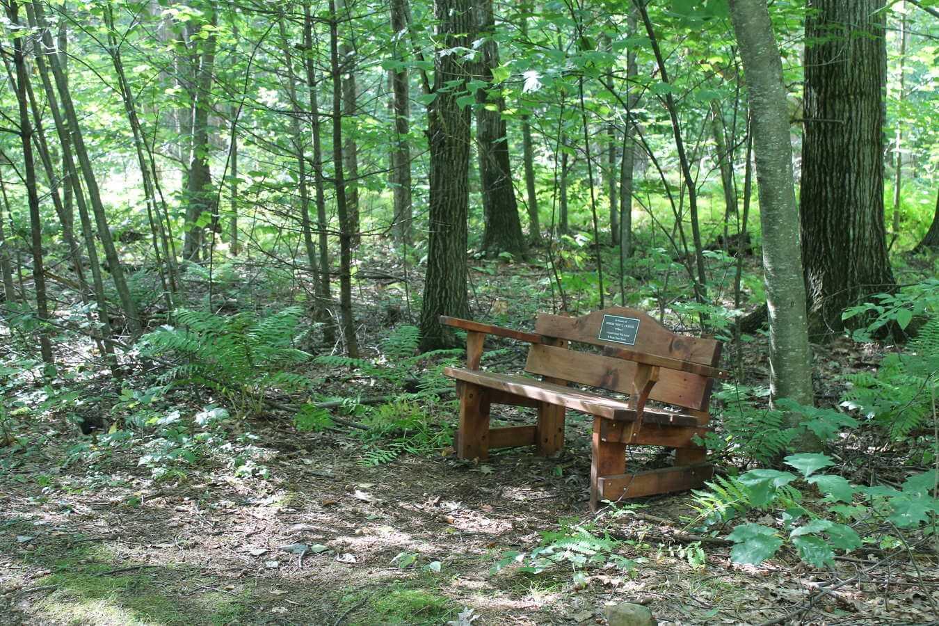 Photo of memorial bench at Alford Springs