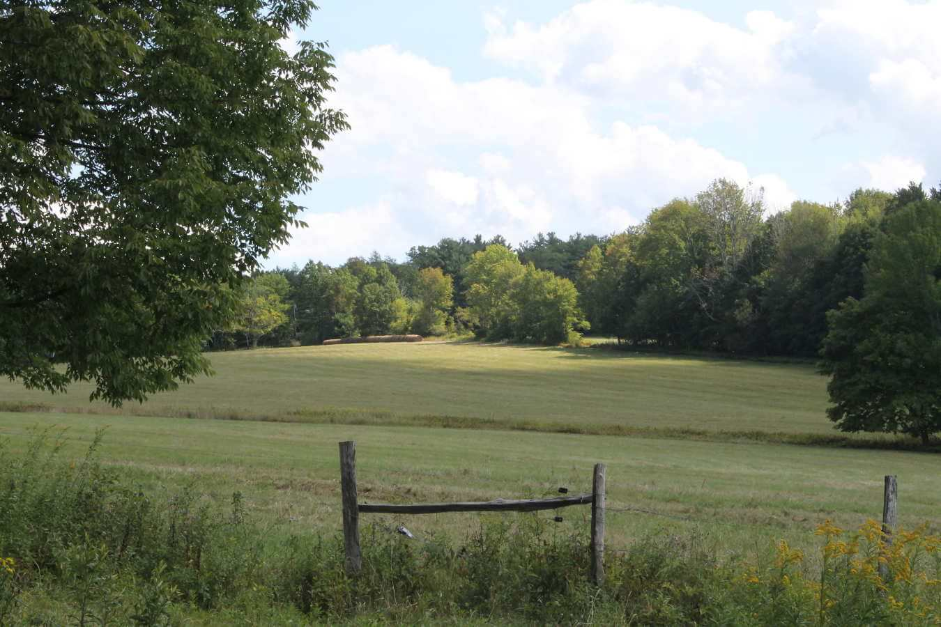 Photo of field at Dunn Farm