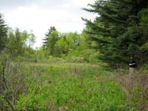Photo of swamp on Hardy land
