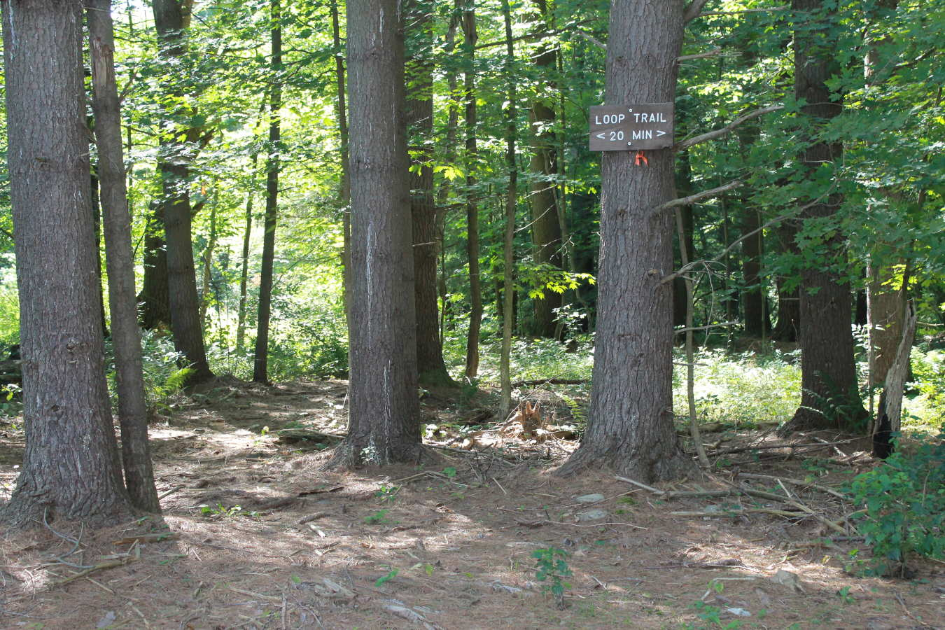 Photo of Schiffman Woods trail sign
