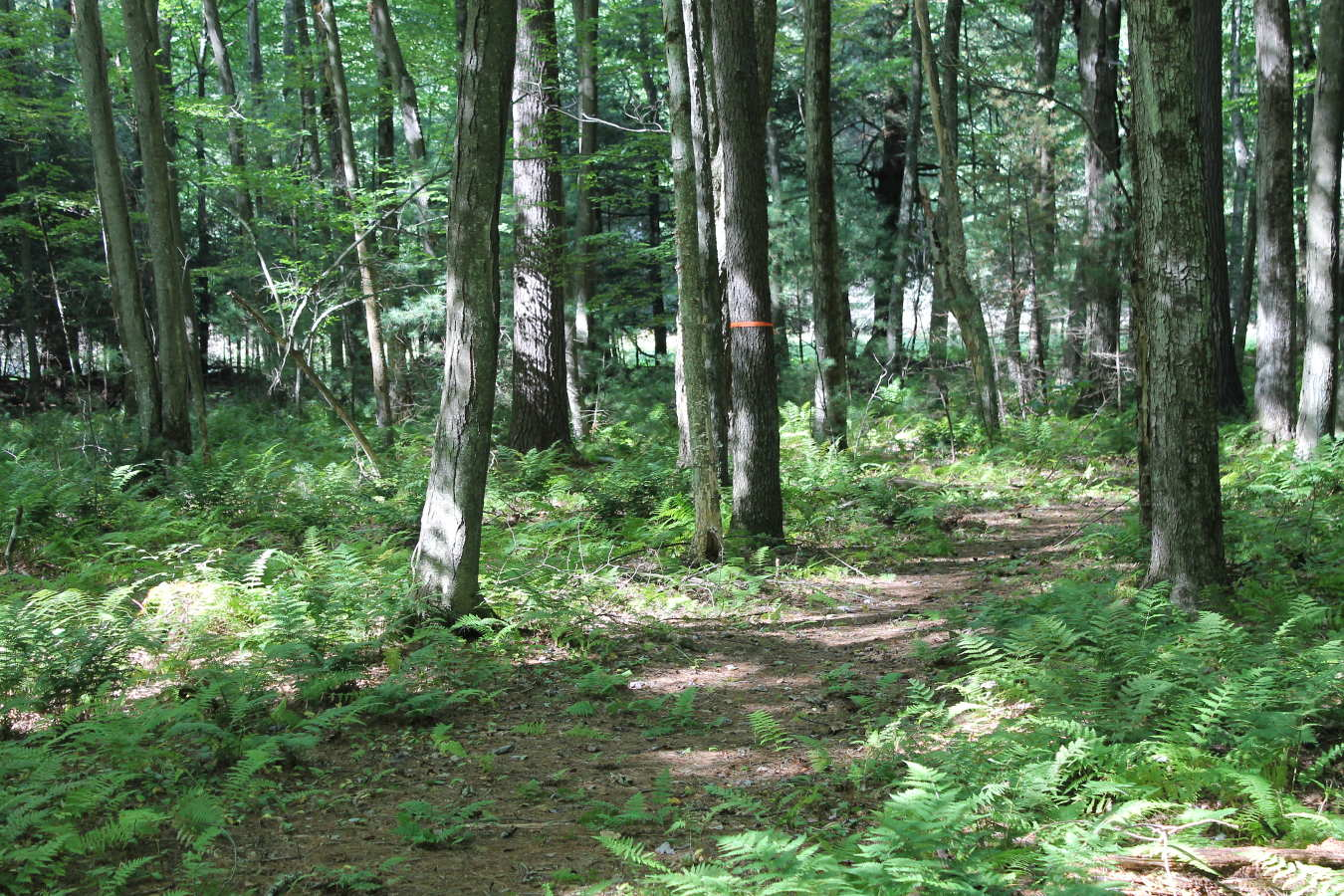 Photo of Schiffman Woods trail