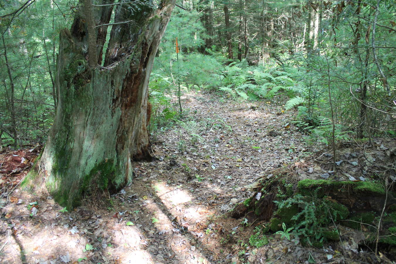 Photo of trail in Schiffman Woods