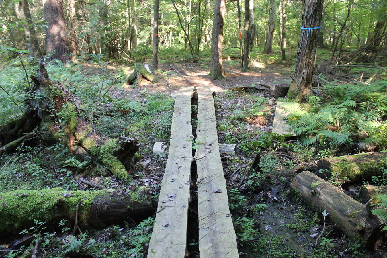 Photo of plank bridge in Schiffman Woods